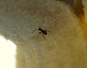 Ameisen sind lästig