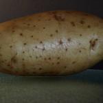 Vervolgens de vastkokende aardappels schillen en in een schaal met water leggen, zodat ze niet bruin worden.
