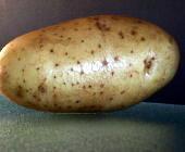 Kies altijd voor een vastkokende aardappel