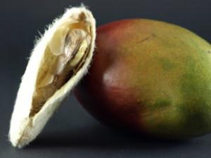 Meestal is de mango vrucht asymmetrisch, ovaalvormig en vaak gekromd. Aan het uiteinde hebben de meeste mango's een korte, brede tuit. Ze kunnen tussen 5–20 cm lang zijn. Sommige soorten bevatten ook een bolvormige vrucht.