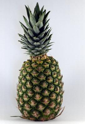 Columbus ontdekte dit exotische fruit voor Europa